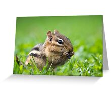 Cute Chipmunk Greeting Card