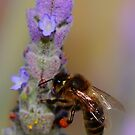 """Lavender Pollen Outlet"" by jonxiv"
