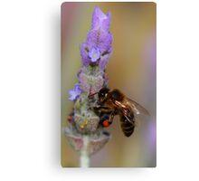 """""""Lavender Pollen Outlet"""" Canvas Print"""