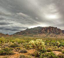 Beauty of the Desert  by Saija  Lehtonen