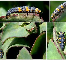 BABY LADYBUGS (SIMILAR TO CATERPILLARS) by Betsy  Seeton
