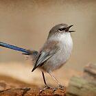 Blue Wren Strut by Jodi Turner