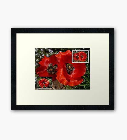 Flanders Poppy Collage Framed Print