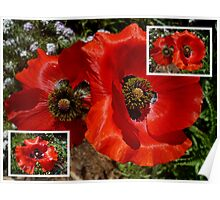 Flanders Poppy Collage Poster