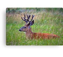 Weedy Deer Canvas Print