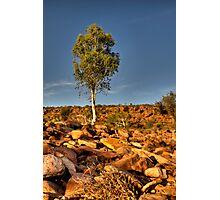 Stand Tall - Ross Graham Gorge - Kalbarri Photographic Print