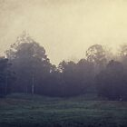 misty morning  by ozzzywoman