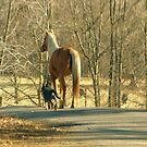 Friends Always take walks together! by Ruth Lambert