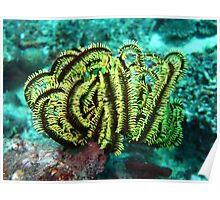 YELLOW FEATHER STAR Poster