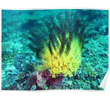 GREEN AND YELLOW FEATHER STAR Poster