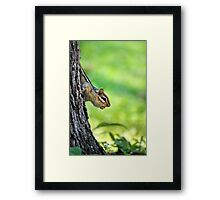 Eastern Chipmunk with Nut Framed Print