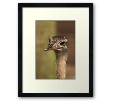 Mr Sticky-Beak Rhea Framed Print