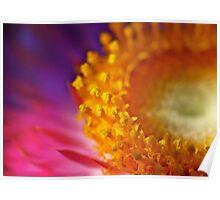 Sweet Sunshine: Everlasting Daisy Poster