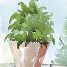 Unknown pot plant by Maree Clarkson