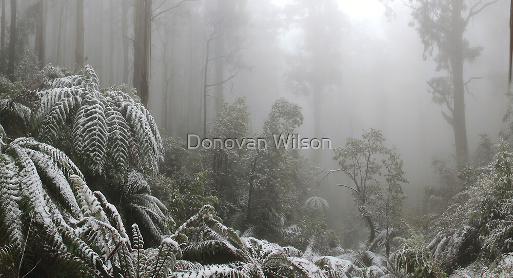 A Forest of Ash and snow  by Donovan Wilson