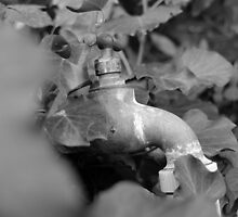 Valve Between Leaf by First Photography