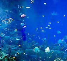 Aquarium by Squealia