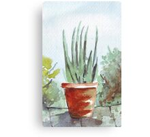 Mother-in-law's tongue Canvas Print