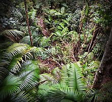 Beautiful rainforest plants by hereswendy