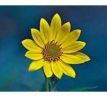 Sundrops Photographic Print