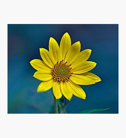 Sundrops Photographic Print