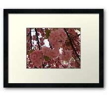 Cherry Blossoms in Paris Framed Print