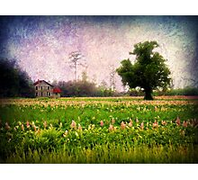 Where the Clary Sage Grows Photographic Print
