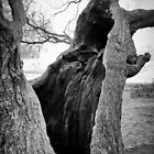 A tree is an incomprehensible mystery.  by Paul Richards