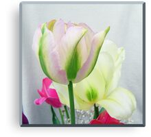 Tender coloured tulips Canvas Print