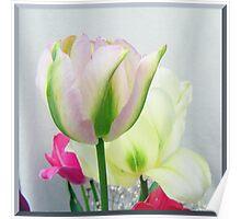 Tender coloured tulips Poster
