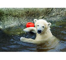 Playing the Ball - Baby Polar Bear Photographic Print