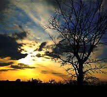Sunset over Gosbecks Archaeological Park by newbeltane
