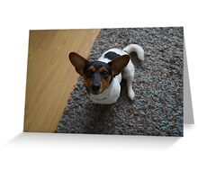 jack russel dog Greeting Card