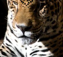 Jaguar in Half-light Sticker