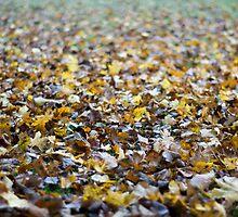 Neverending Carpet Of Leaves by Richard Knaggs