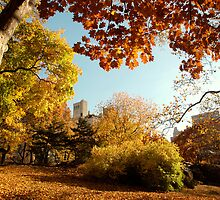 A View of the Central Park by Magdalena Warmuz-Dent
