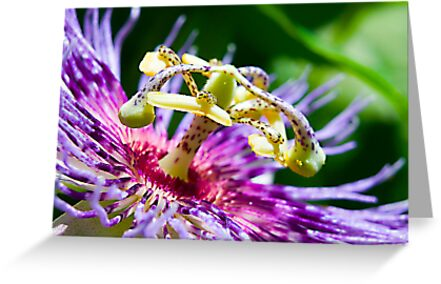 Passion Flower up Real Close by TJ Baccari Photography