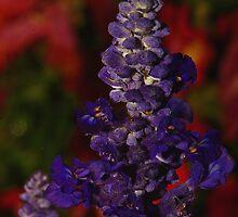 Purple Glory by Kwon Ekstrom