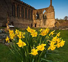 Bolton Abbey, Yorkshire Dales, Yorkshire Dales by Jim Round