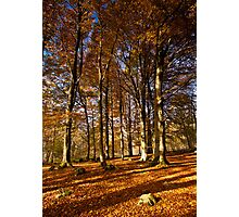 Grass Woods, Yorkshire Dales Photographic Print