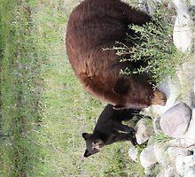 Momma and Cub by Carol Bock