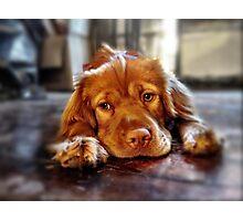 Mia the Wonderpuppy Photographic Print