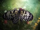 Winged Beauty by Carol Bleasdale