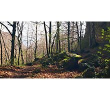 A Walk in the Forest Photographic Print