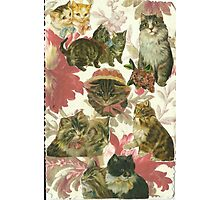 Pussys Galore! Photographic Print
