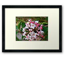 Springtime Macros VI Framed Print