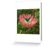 Decorating a protea Greeting Card