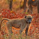 Up with the sun by Explorations Africa Dan MacKenzie