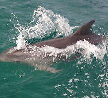 Beautiful Tasmania - fun with the dolphins by georgieboy98
