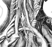 Anatomical Head and Torso Sticker